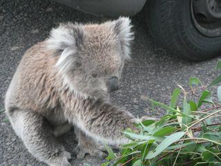 Merediths camera 2011 australia dec 18-20 013