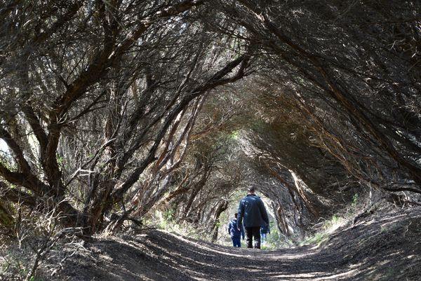 Winter Walk to Bushrangers Bay - The Plunge Down Under